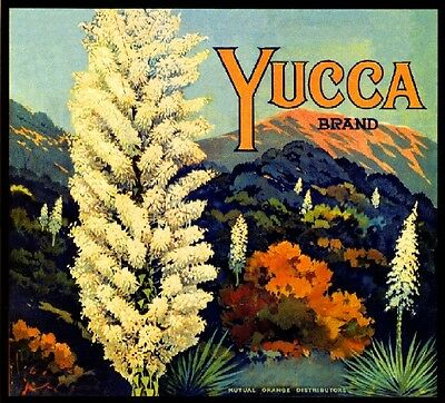 Riverside Yucca Flowers Orange Citrus Fruit Crate Label Vintage Art Print