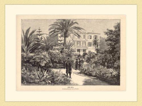 Villa Zirio Palmen Originalzeichnung von H Nestel Holzstich GL II 274