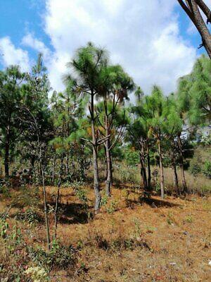 Terreno en zona boscosa