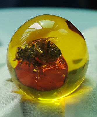 real bee inside the amber egg