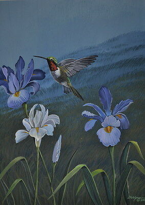 Ruby Throated Hummingbird Print on Irises 11 x 14 by Doug Walpus Watercolor