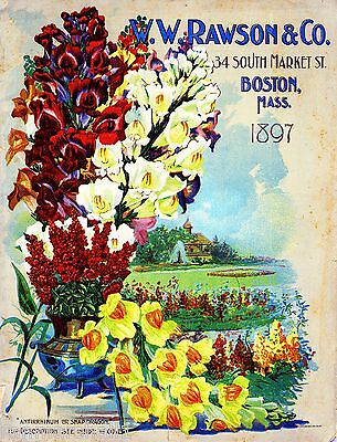 1897 Rawson & Co. Vintage Flowers Seed Packet Catalogue Advertisement Poster