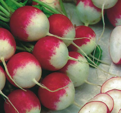 Gemüse Rettich Sparkler Ca 1500 Samen