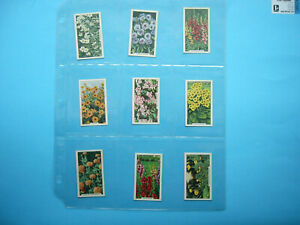 SET-48-1938-GALLAHER-LIMITED-VIRGINIA-HOUSE-GARDEN-FLOWERS-TRADING-CARDS-NICE