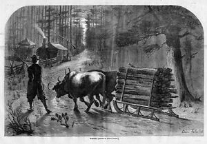 OXEN PULLING HAULING LUMBER TIMBER ON SLEIGH BY EDWIN FORBES OXEN YOLK WINTER