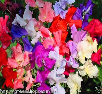 Flower - PEA SWEET DREAMS MIX - ROYAL PEA - 45 SEEDS - Lathyrus Odoratus -