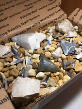 """FIND YOUR OWN SHARK TEETH!"" Kids Fossil Dig Gift Dinosaur Megalodon Kit Present"