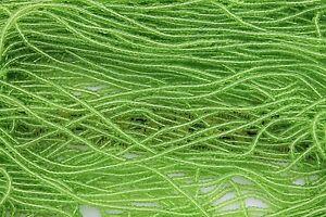 Trans-Light-Pale-Green-11-0-Czech-Glass-Seed-Beads-Hank