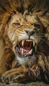 PLAQUE EN MÉTAL  LION      30 X 20 CM