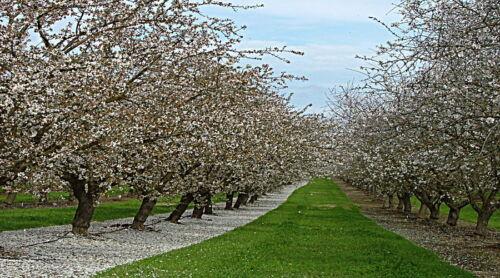 Orchard Kit S Drip Irrigation Water System 25 emitters Vineyard Garden Nursery