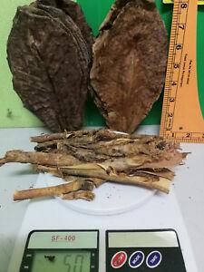 30 Pcs Catappa Leaves 7 - 8 In (environ 20.32 Cm) + 50 G D'amandier Indien L'écorce Des Arbres. Livraison Gratuite-afficher Le Titre D'origine