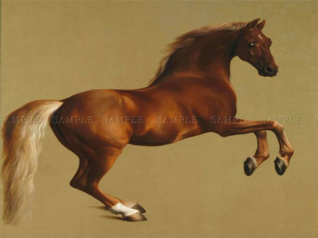 GEORGE STUBBS WHISTLEJACKET HORSE OLD MASTER ART PAINTING PRINT POSTER 1077OMA