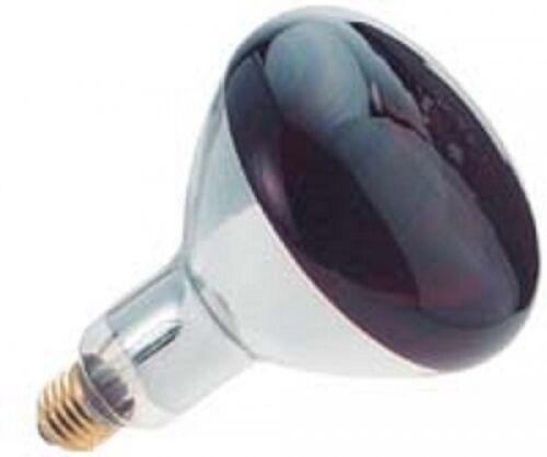 Göbel Infrarotbirne 150 Watt rot 70609