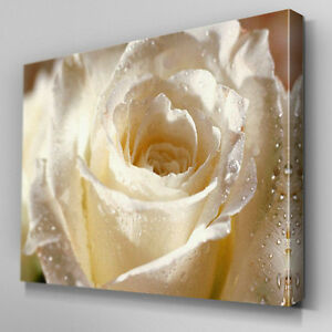 264af8c480c Image is loading FL031-Glistening-White-Rose-Canvas-Wall-Art-Multi-