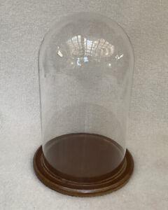"Glass Display Dome Oddities Curiosities 8"" High, Wood Base"