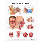 Ear, Nose and Throat Anatomical Chart by Anatomical Chart Co. (Fold-out book or chart, 2001)