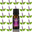 Essential-Oils-Pure-10ml-Natural-Oil-Grade-Therapeutic-Aromatherapy-Fragrances Indexbild 47