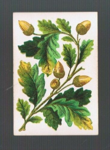 Playing  Cards 1 ANTIQUE SQ CNR BRANCH OF ACORNS /& OAK LEAVES CIRCA 1800/'S SQ11