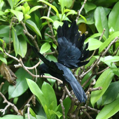 2 Stück Rabe Gartenfigur Vogelschreck Taubendchreck