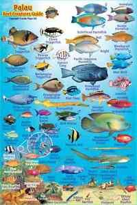 franko palau reef creatures guide laminated fish identification card