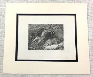 1843 Antico Stampa Leone Leonessa Africano Safari Grande Gioco Caccia Incisione