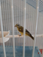 Green Finch Kijiji Buy Sell Save With Canada S 1 Local Classifieds