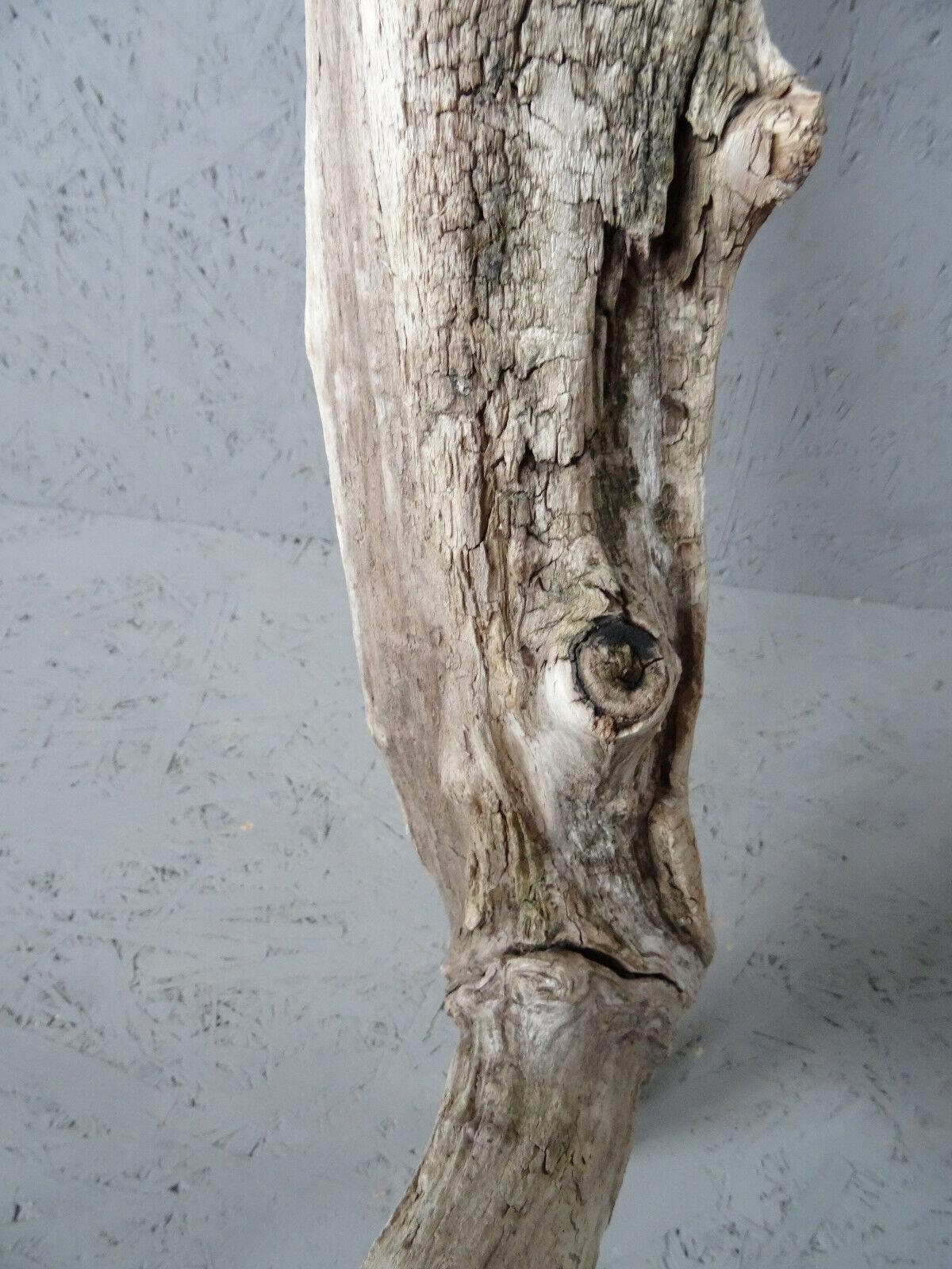 Schwemmholz Treibholz Holz Holzstück bauen basteln
