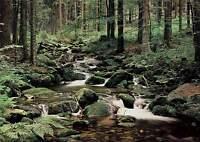 Vlies Fototapete- Wald Bach -(302v)- 350x260cm -digital 7bahnen-kleister Bäume