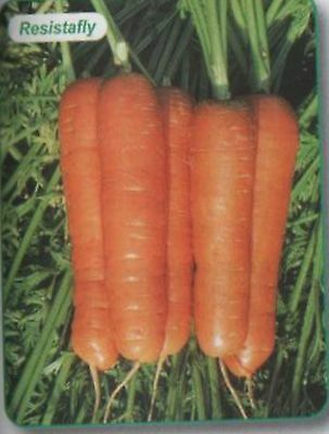 CARROT RESISTAFLY NO ROOT FLY AP 160 SEED FREEPOST