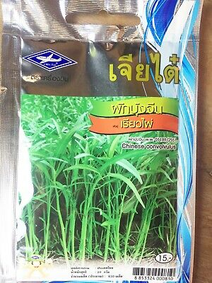3X 400 Convolvulus Organic Plant Asian Garden Morning Glory SEEDS