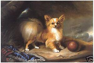 Victorian PAPILLION Vintage CANVAS Dog ART Print  LARGE