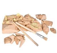 Stegosaurus Skeleton Excavation Kit Fossil Dig Dinosaur Bones Display 6 In Exdfo