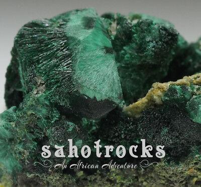 sahotrocks