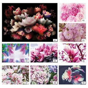 Vliestapete-Fototapete-Tapete-Vlies-Magnolie-Blumen-Orchidee-Rosen-Natur-FW012