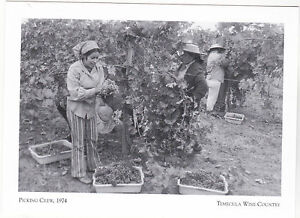 Postcard-034-Picking-Crew-034-1972-The-Fresh-Grapes-Temecula-Wine-Country-A95-2