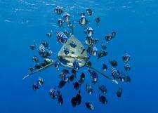 3-D-CARTOLINA: weissflossenhai e pesce sciame-friendly Shark