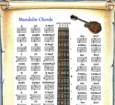 "60 CHORDS MANDOLIN CHORDS POSTER 13/""X19/"""