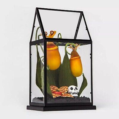 Hyde /& Eek Boutique Yellow Creepy Face Halloween Faux Plants Terrarium TARGET