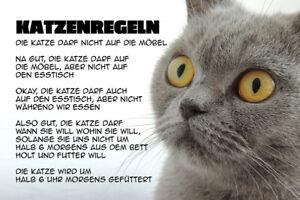 Katzenregeln-Katzen-Regeln-Blechschild-Schild-gewoelbt-Tin-Sign-20-x-30-cm-W0196