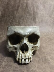 Details about Male Real Human Skull Replica Drinking cup bowl food safe pet  bowl -Zane Wylie