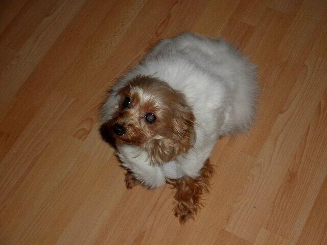 Mink Fur Small Pet Dog Coat Clothes S M  snowwhite