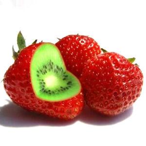 Am-KF-100-200-400Pcs-Rare-Strawberry-Kiwi-Seeds-Sweet-Fruit-Yard-Bonsai-Plants