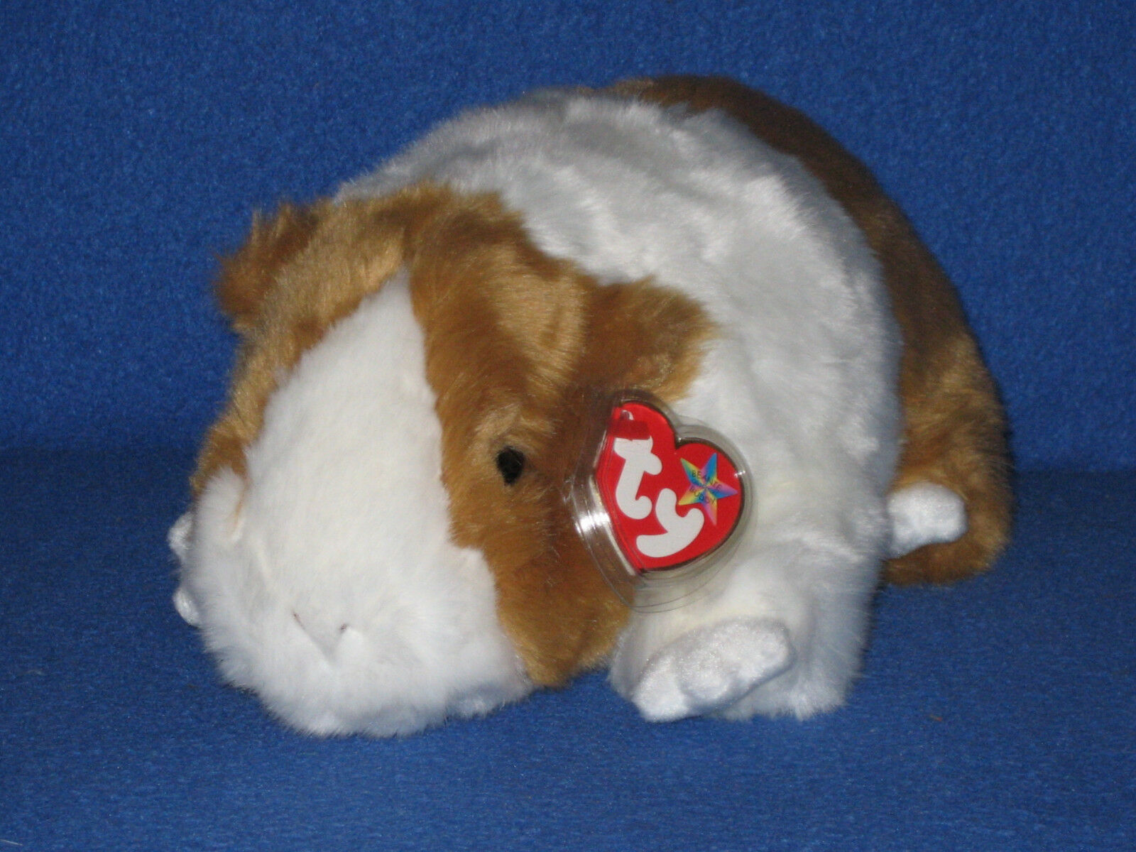 TY TWITCH THE GUINEA PIG BEANIE BUDDY - MINT with MINT TAGS