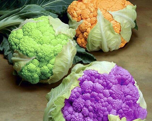 100 Seeds cauliflower Mix Color Broccoli Vegetable seed