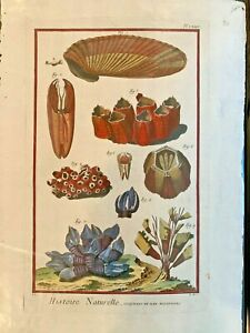 1751-DIDEROT-Antique-Folio-Hand-Colored-Engraving-Coral-Sealife-74