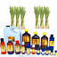 3ml-Essential-Oils-Many-Different-Oils-To-Choose-From-Buy-3-Get-1-Free thumbnail 47