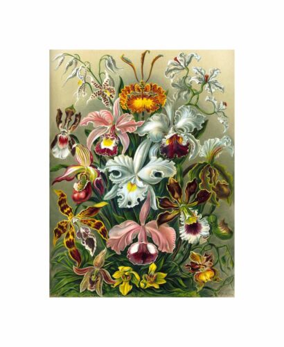 Colour Plate Ernst Haeckel Kunstformen Der Natur Canvas Print