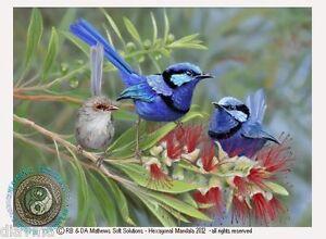 ART-Australian-Splendid-Blue-Fairy-Wren-Bird-Original-nature-print-by-Di
