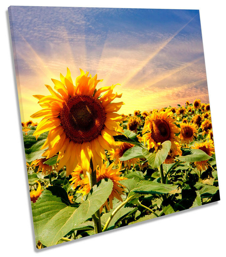 Sunflower Sunset Floral Flowers SQUARE CANVAS Wand Kunst Framed Drucken
