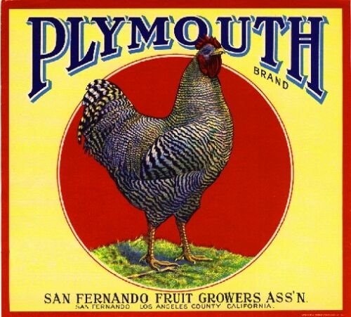 San Fernando Plymouth Rooster Chicken Orange Citrus Fruit Crate Label Print